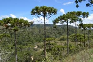 Trilha do Rio Sapucaí - Cânions - Horto Florestal